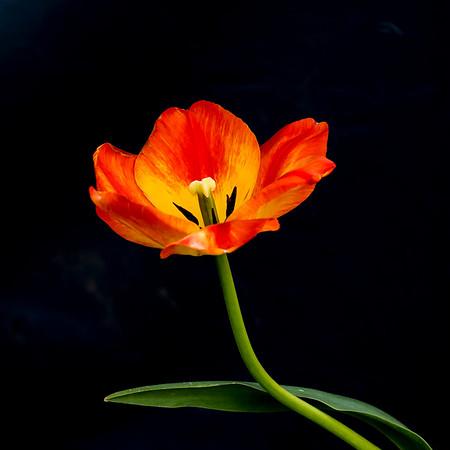 Glenns Flowers