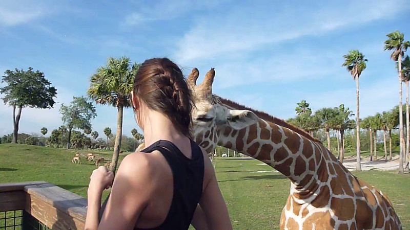 Philip Giraffe 1.MOV