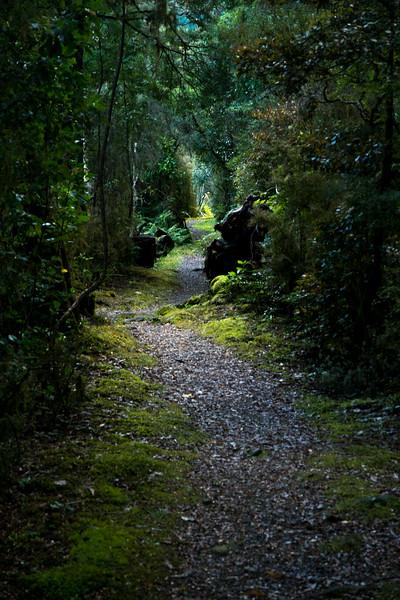 forest hike-1.jpg