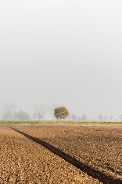 Lonely Tree - Nonantola, Modena, Italy - November 18, 2020