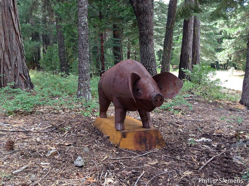 Wild steel pig