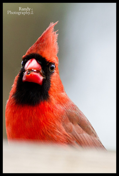 Birds of Feb