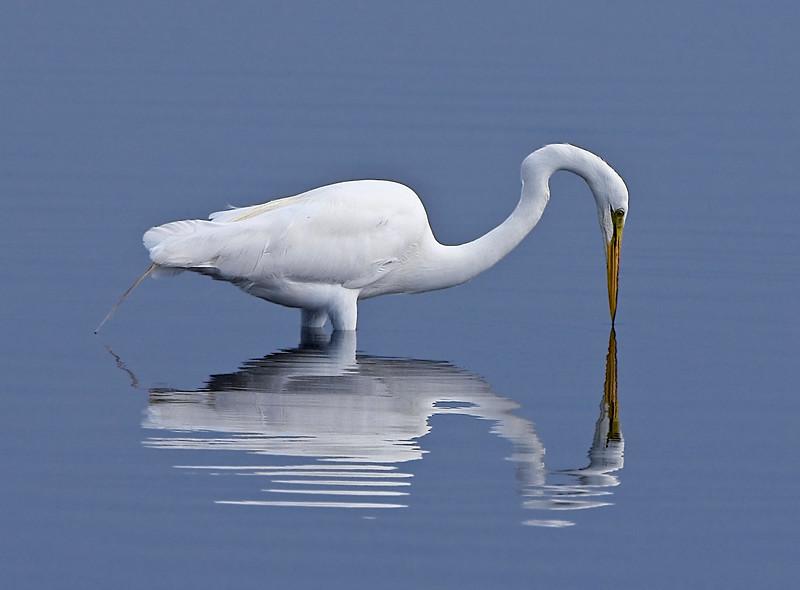 Egret-13.jpg