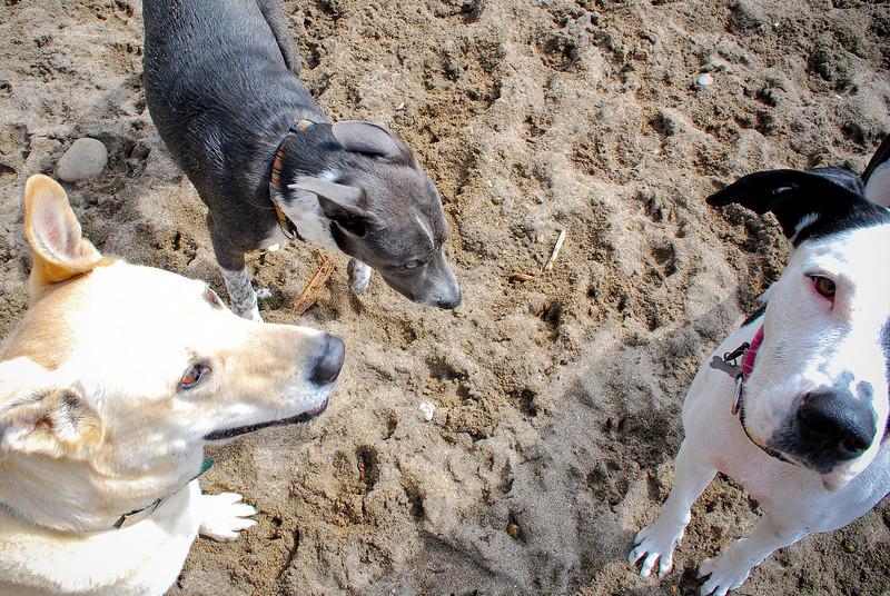 dogs_beach-067.jpg