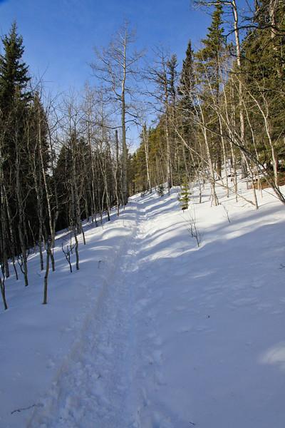 Diamond T Loop Trail