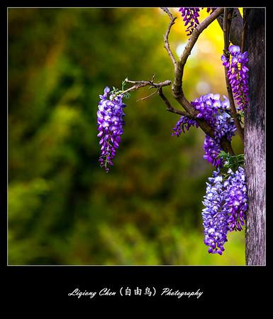 Unknown flower-2