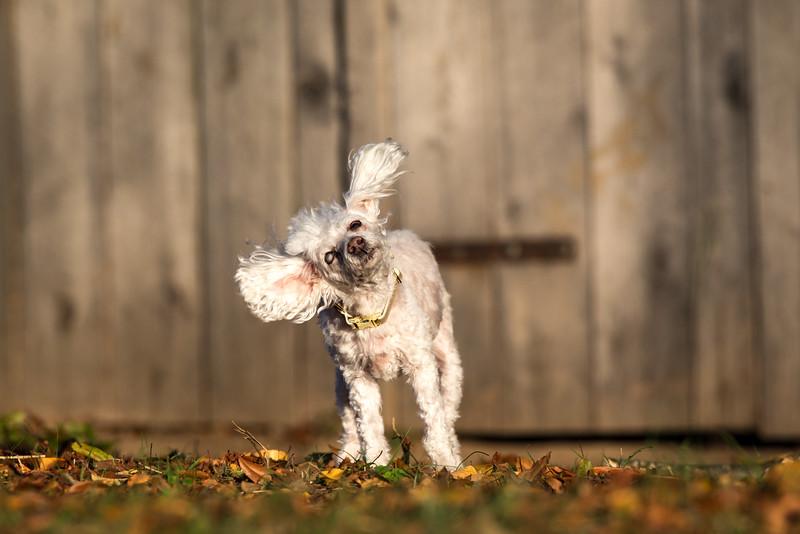 16_1024_buntingdogs-24.jpg