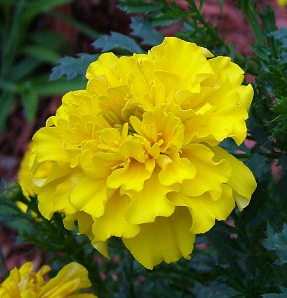 Flower 067.jpg