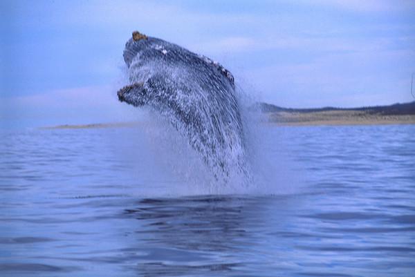 Whales, Dolpins, Seals etc.