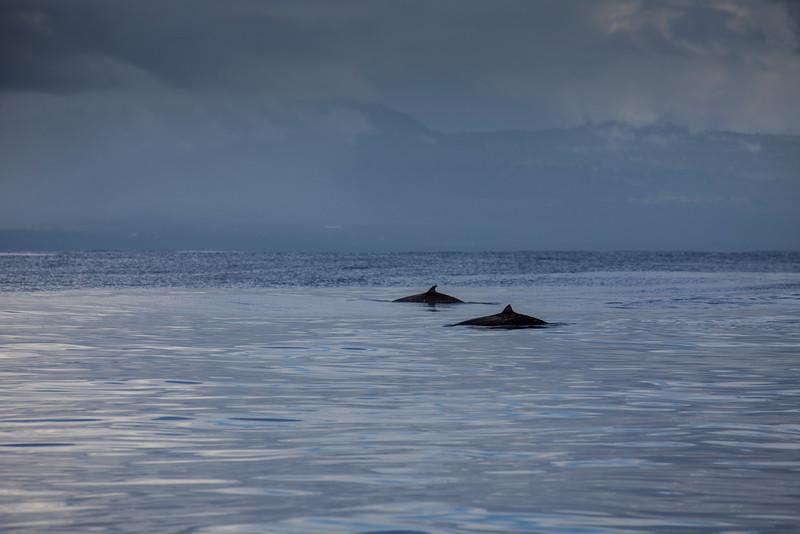 McGlothlin_Samoa_Yeti_whales-1.jpg