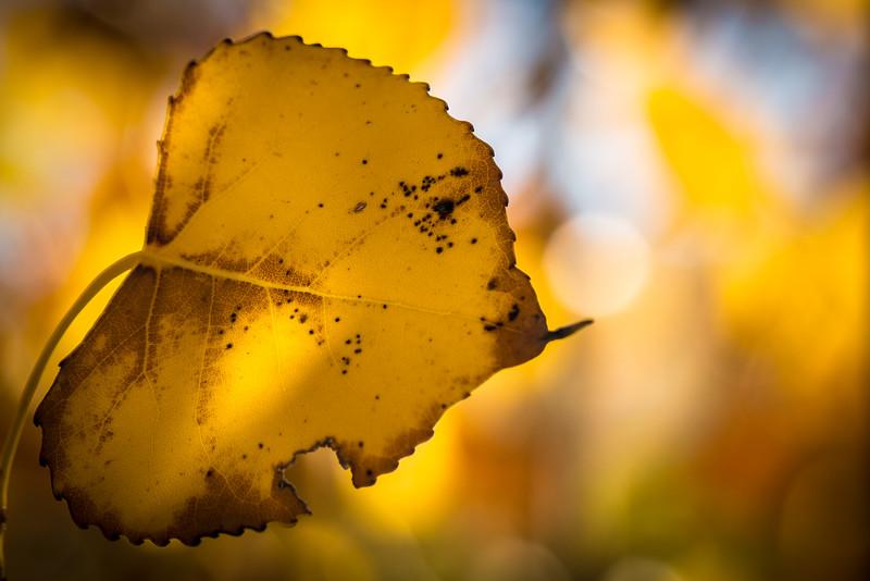 20151024-Fall Colors-40.jpg
