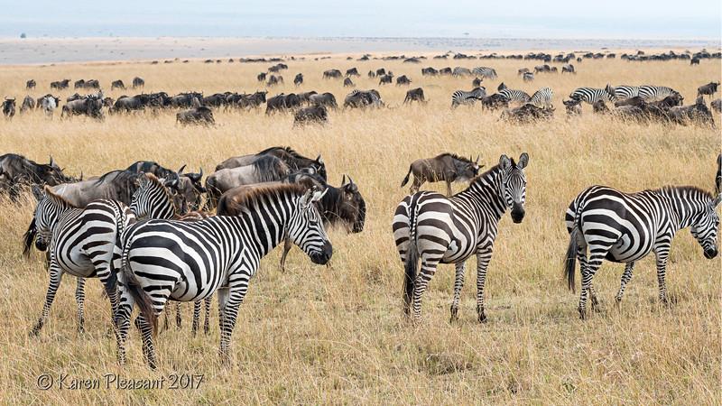 Kenya - Other