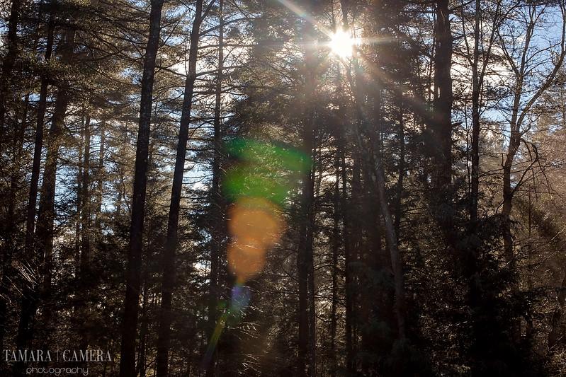 Sunshine Woods-5.jpg