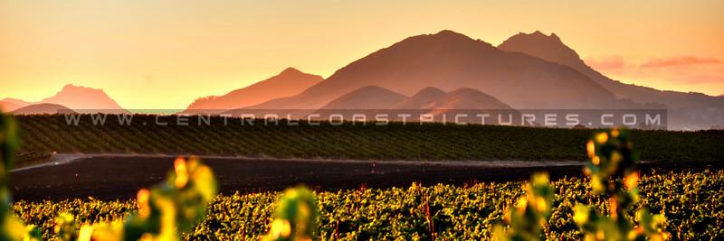 pano-edna-valley-winery-vineyard_3331.jpg