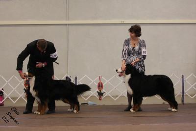 Winners Dog PVBMDC Sunday 2/20/2011
