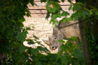 Paris - Zoo de Vincennes