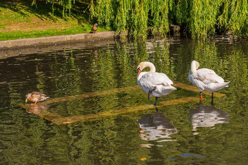 River Hiz, Hitchin, Hertfordshire
