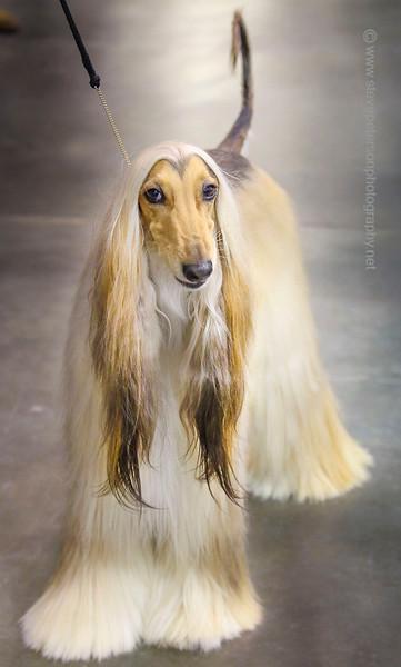 2014 Land O'Lakes Kennel Club Dog Show