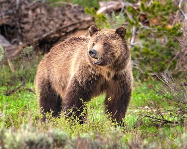 Bears4Me