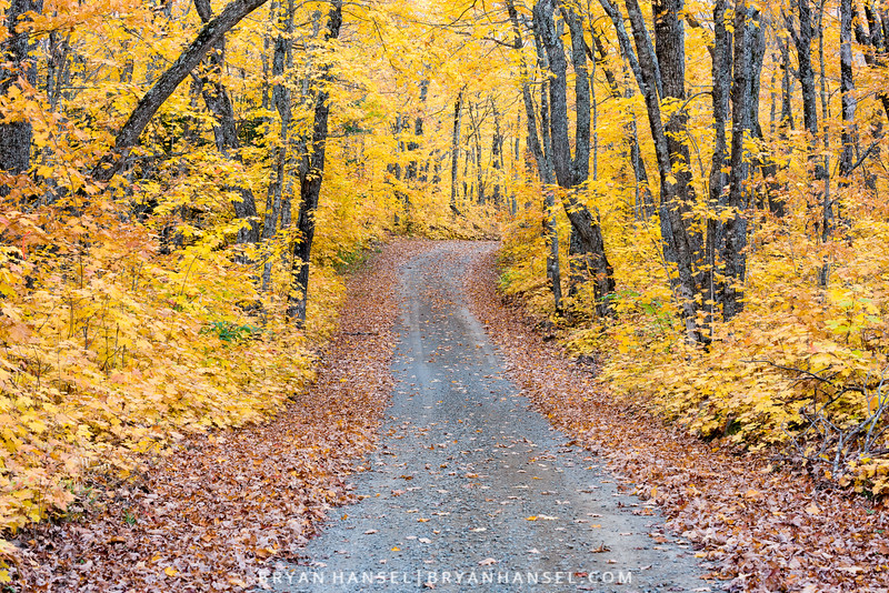 Rengo Road Fall Colors