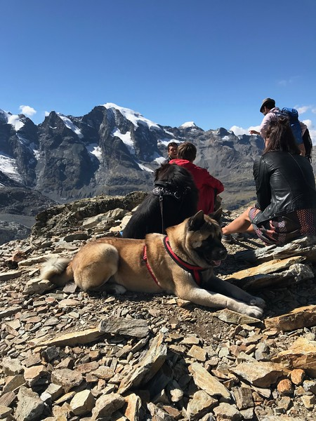 Dogs enjoying the sun while the humans gaze at the mountains.