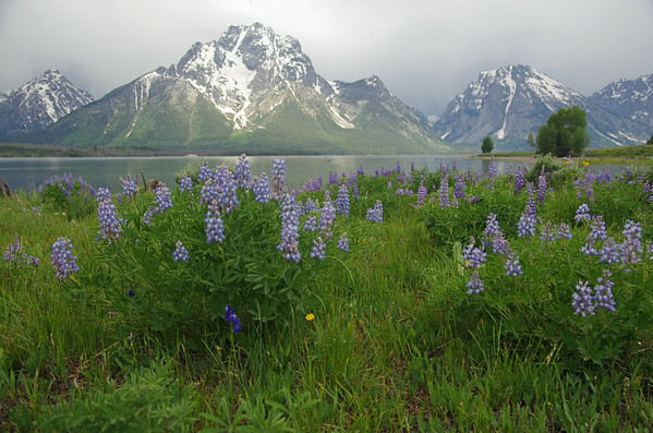 Grand Teton and Yellowstone National Parks, June 2014