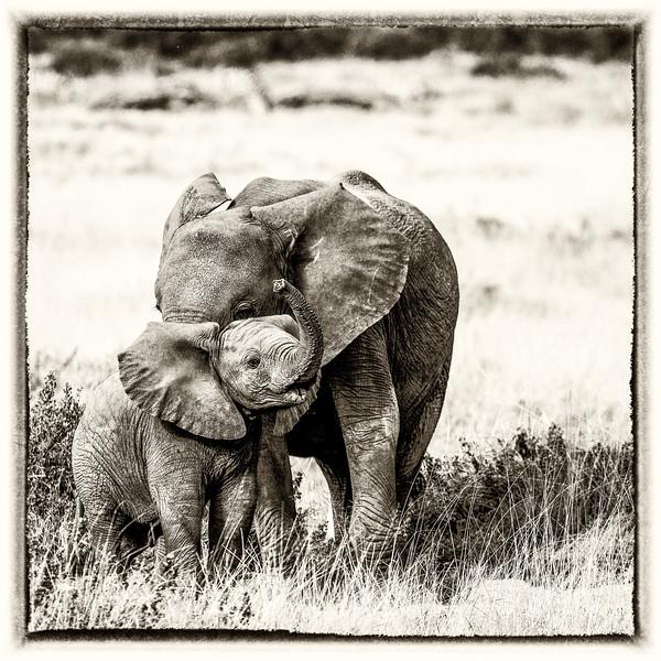 kenya-amboseli-national-park-elephant-group-26-Edit-3.jpg