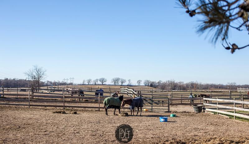 At the Farm 11-24-2012