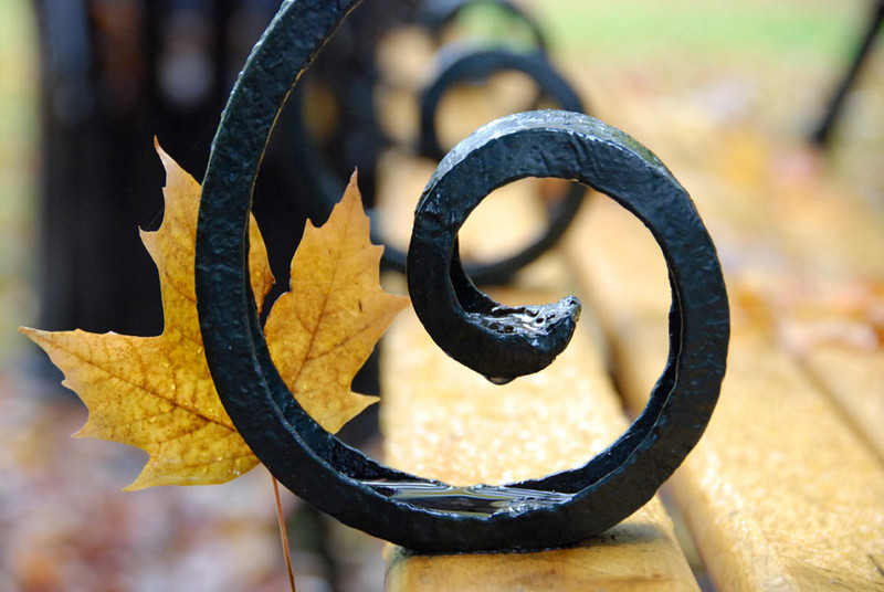 leaf-and-bench.jpg