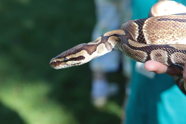 Metroparks Snakes, Reptiles and Fun 2011
