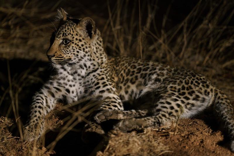 LeopardHills-20180930-2371.jpg