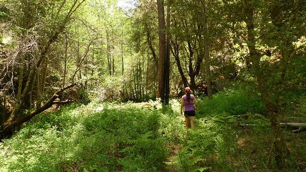 Ventana Wilderness, Pine Valley (05.19-20.2012)
