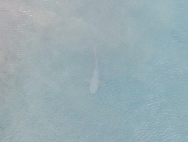 Shark swimming in the ocean from a drone