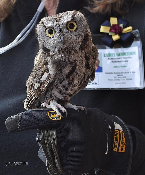 SMALL OWL 3 12-14-2014.psd