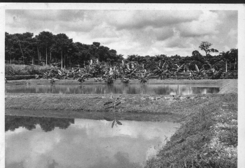 1960 - viveiros de Tilapia?