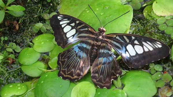 Schmetterlingausstellung 2015
