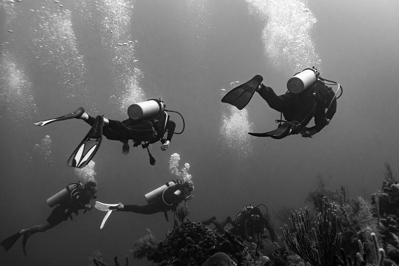 Scuba divers underwater around coral reefs, Three Amigos, Turneffe Atoll, Belize Barrier Reef, Belize
