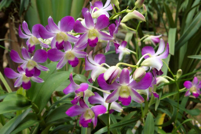 20090901_3161 Guangzhou botanical gardens. Orchid house