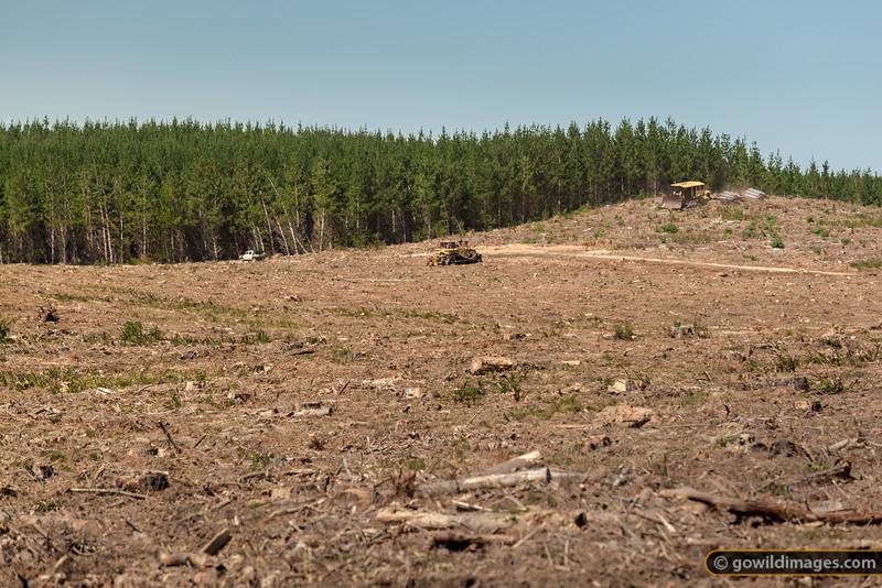 Plantation Logging