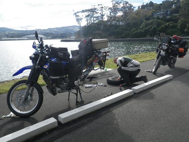 NZ (81) Dunedin Peninsula.JPG