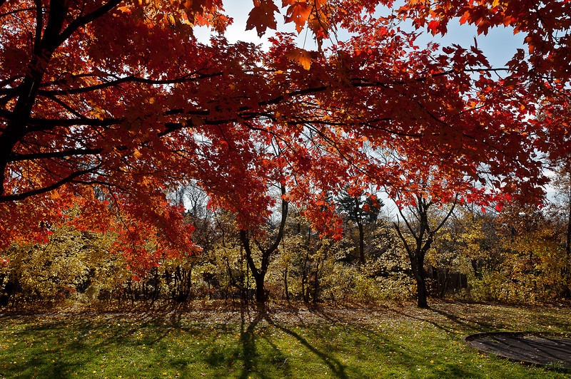 fall21.jpg