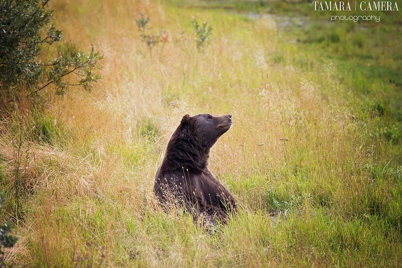 Bear2-7-2.jpg