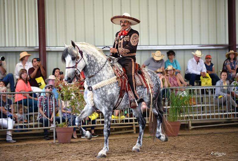 HorseDemo_A.jpg
