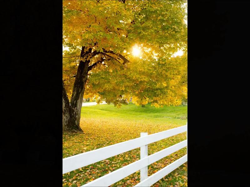 Fall slideshow.wmv
