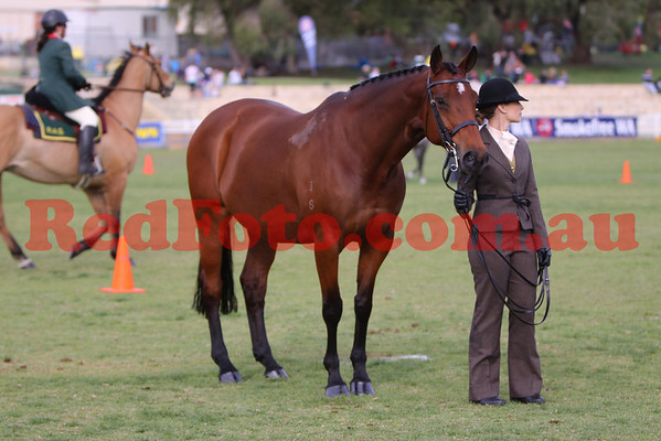 2009 09 28 Perth Royal Show Trakehner