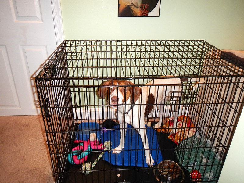 dog in crate.jpg