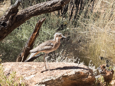April 2 - Alice Springs