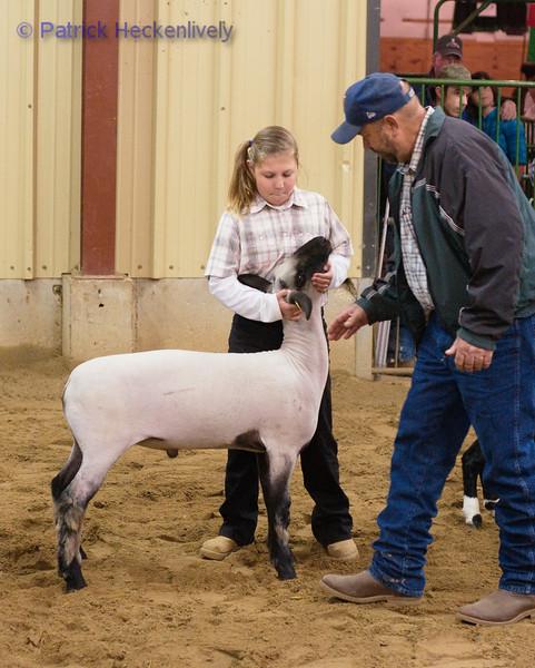 2010-09-27 Sheep 1000-1100
