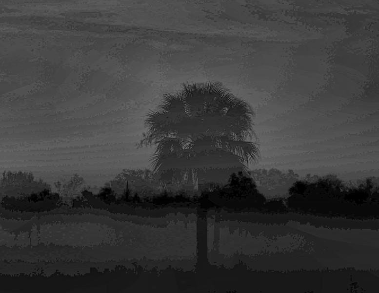 Palm Tree in a Meadow, N. Fort Myers FL