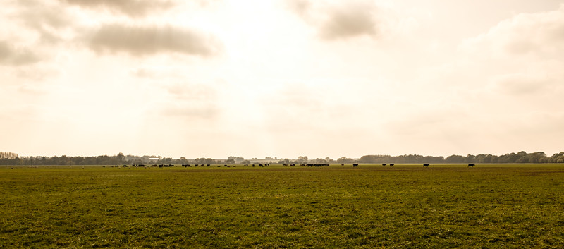 Portholme Water Meadow, Huntingdon, Cambridgeshire